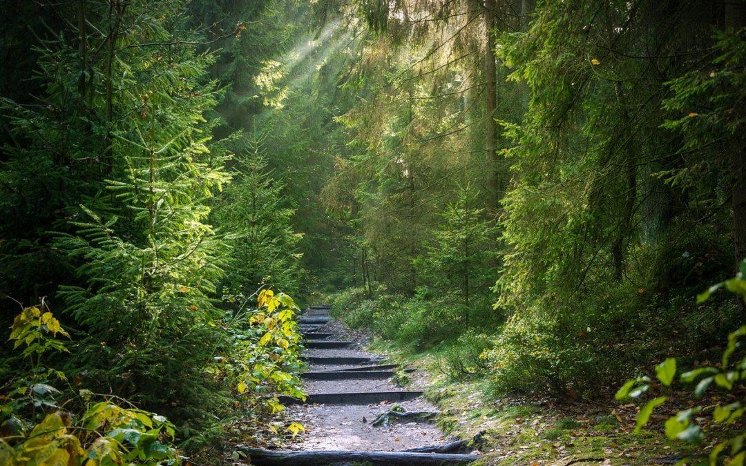 Les vertus thérapeutiques de la Forêt